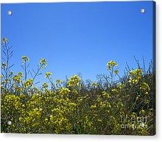Vista Flores Acrylic Print by Jim Thomson