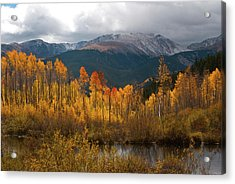 Vivid Autumn Aspen And Mountain Landscape Acrylic Print