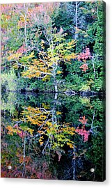 Vivid Fall Reflection Acrylic Print