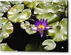 Vivid Purple Water Lilly Acrylic Print by Teresa Mucha