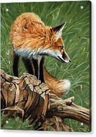 Vixen Acrylic Print