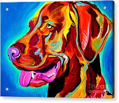 Vizsla - Dog Days Acrylic Print by Alicia VanNoy Call
