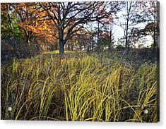 Acrylic Print featuring the photograph Volo Bog Fall Morning by Ray Mathis