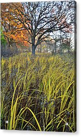 Acrylic Print featuring the photograph Volo Bog Natural Area by Ray Mathis
