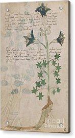 Voynich Flora 03 Acrylic Print