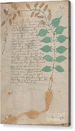 Voynich Flora 07 Acrylic Print