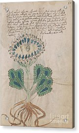 Voynich Flora 11 Acrylic Print