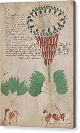 Voynich Flora 15 Acrylic Print