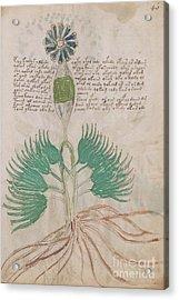 Voynich Flora 16 Acrylic Print
