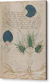 Voynich Flora 20 Acrylic Print