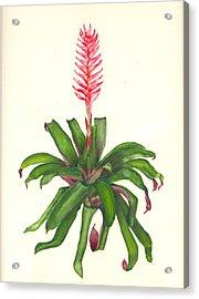 Vriesea Hybrid Acrylic Print