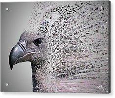 Vulture Break Up Acrylic Print