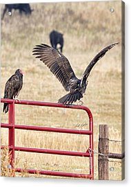 Acrylic Print featuring the photograph Vulture Vee by Bill Kesler