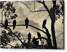 Vultures And Cloudy Sky Acrylic Print