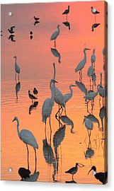 Wading Birds Forage In Colorful Sunset Acrylic Print by George Grall