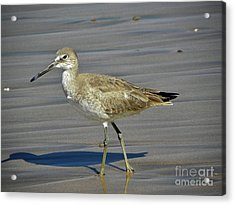 Wading Day Acrylic Print by Sheila Ping