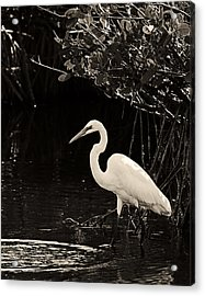 Wading For Food Acrylic Print by Ron Dubin