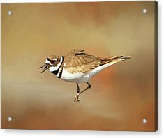 Wading Killdeer Acrylic Print by Donna Kennedy