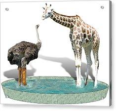 Wading Pool Acrylic Print by Gravityx9  Designs