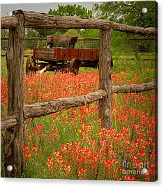 Wagon In Paintbrush - Texas Wildflowers Wagon Fence Landscape Flowers Acrylic Print by Jon Holiday