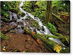 Wahkeena Falls Acrylic Print by Jonathan Davison