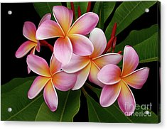 Wailua Sweet Love Texture Acrylic Print by Sharon Mau