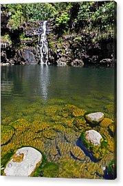 Waimea Falls Acrylic Print by Elizabeth Hoskinson