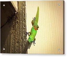 Acrylic Print featuring the photograph Waimea Gecko by Geoffrey Lewis