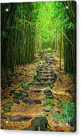 Waimoku Bamboo Forest #2 Acrylic Print by Inge Johnsson