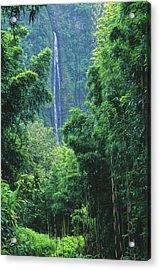 Waimoku Falls Acrylic Print by Dave Fleetham - Printscapes