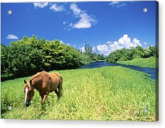 Wainiha Valley Acrylic Print by Peter French - Printscapes
