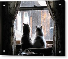 Waiting At The Window Acrylic Print