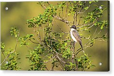 Acrylic Print featuring the photograph Waiting For A Victim by Onyonet  Photo Studios