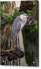 Waiting For Breakfast Acrylic Print