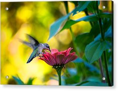 Waiting For Butterflies Acrylic Print