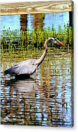 Waiting For Dinner Acrylic Print