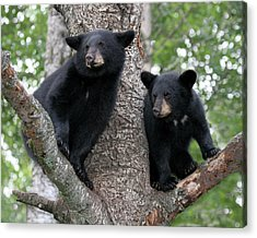 Waiting For Mom Acrylic Print by Gerry Sibell