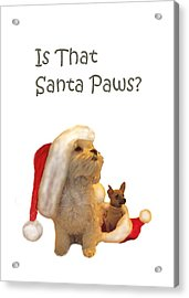 Waiting For Santa Paws Acrylic Print by Joni McPherson