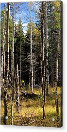 Waiting For Snow Sierra Nevada Autumn Larry Darnell Acrylic Print