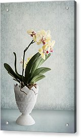 Waiting For Spring Acrylic Print by Maggie Terlecki