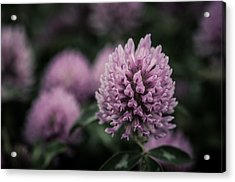 Waiting For Summer Acrylic Print by Miguel Winterpacht
