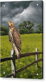 Waiting For The Storm - Red Tail Hawk Acrylic Print