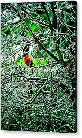 Waiting For The Thaw Acrylic Print