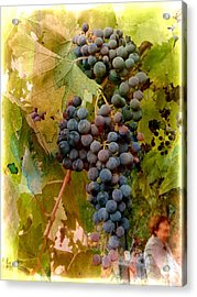 Waiting For Wine Acrylic Print by Dorothy Berry-Lound
