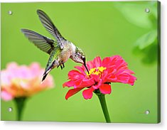 Acrylic Print featuring the photograph Waiting In The Wings by Christina Rollo