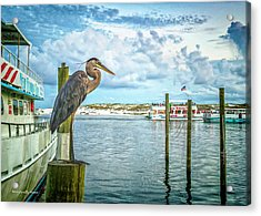 Waiting On Dinner..... Acrylic Print