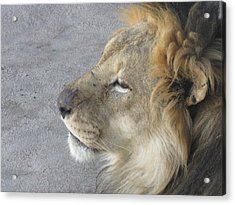 Acrylic Print featuring the photograph Waiting by Tammy Sutherland