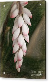 Waiting To Bloom Acrylic Print