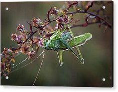 Acrylic Print featuring the photograph Waiting To Dry by Monte Stevens