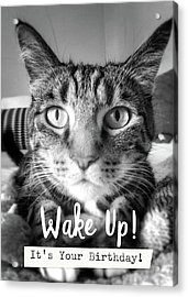 Wake Up It's Your Birthday Cat- Art By Linda Woods Acrylic Print by Linda Woods